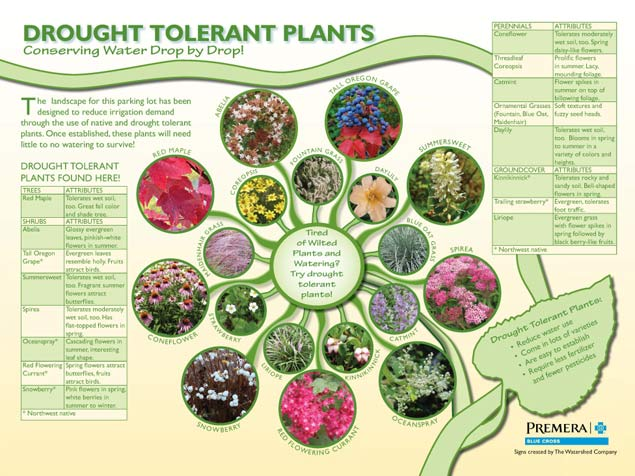 Interpretive signs about drought tolerant plants designed for Premera by The Watershed Company.