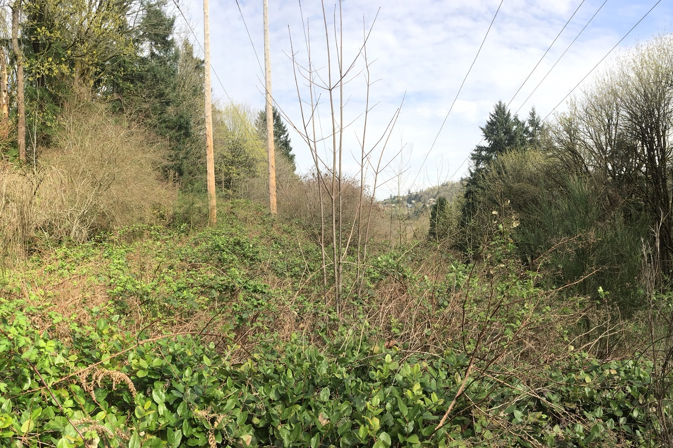 The Watershed Company provided assessment, permitting, and tree inventory services in support of PSE's Energize Eastside project.