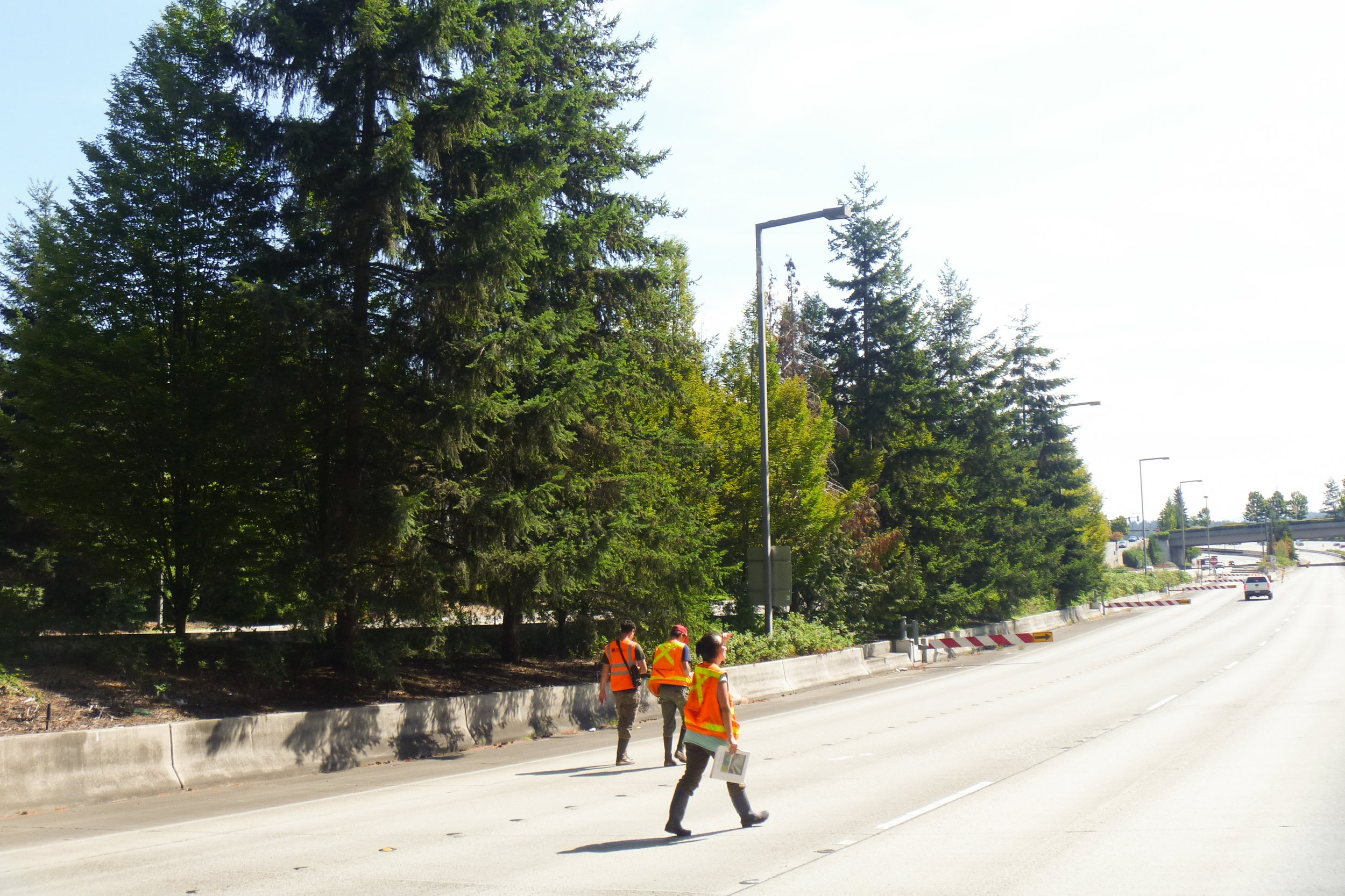 The Watershed Company provided wetland and stream delineation, tree inventory, environmental permitting, and mitigation design in support of Sound Transit's extension of rail lines.