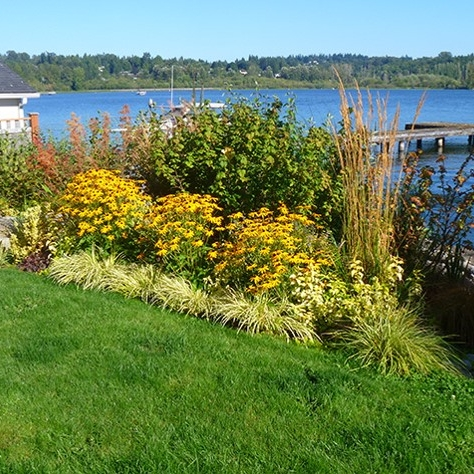 Naturalized shoreline design with native plantings, designed after a wetland delineation by The Watershed Company.