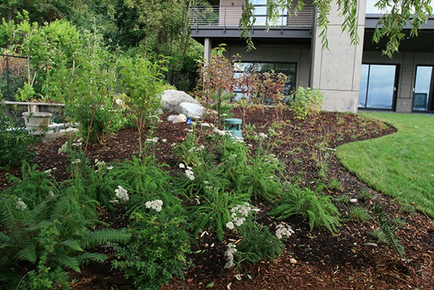 Shoreline mitigation allowed these Lake Washington homeowners to build a large detached garage. By improving their shoreline and landscape with native plantings, they were also able to install a new outdoor storage building, expanded patio, and pool.