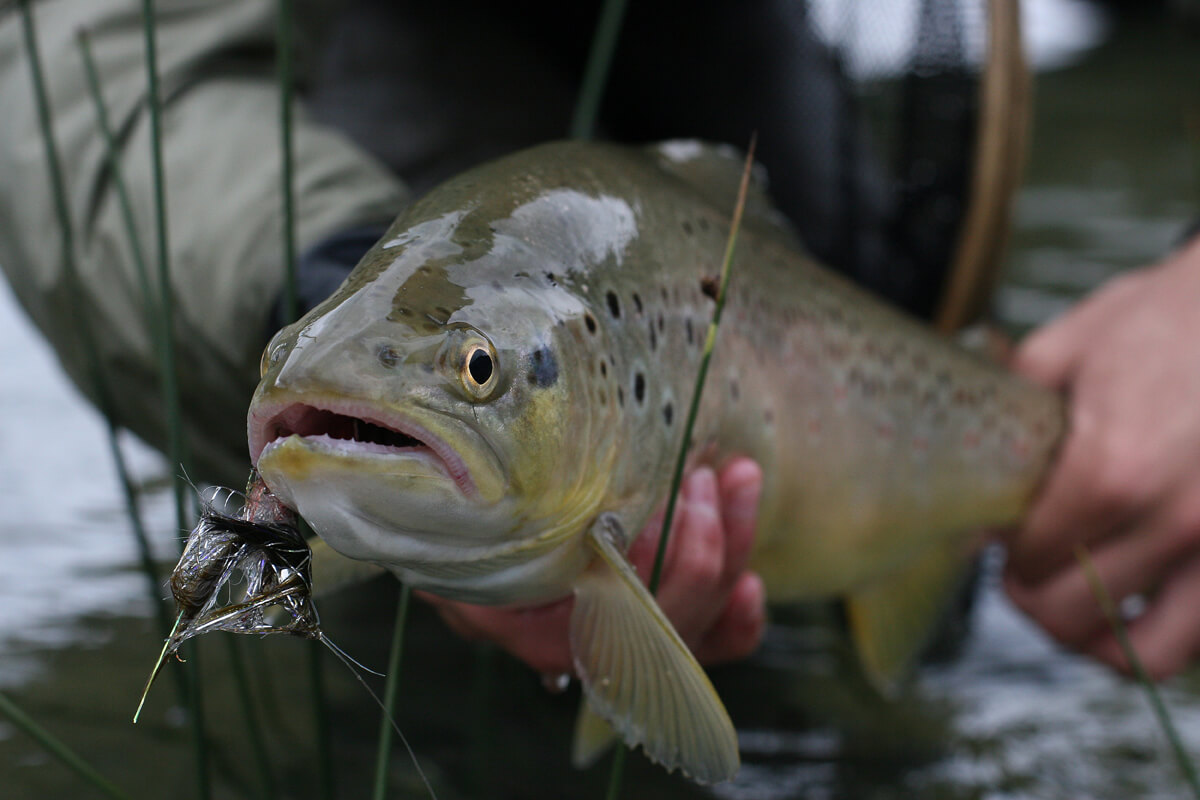 pesca-09.jpg