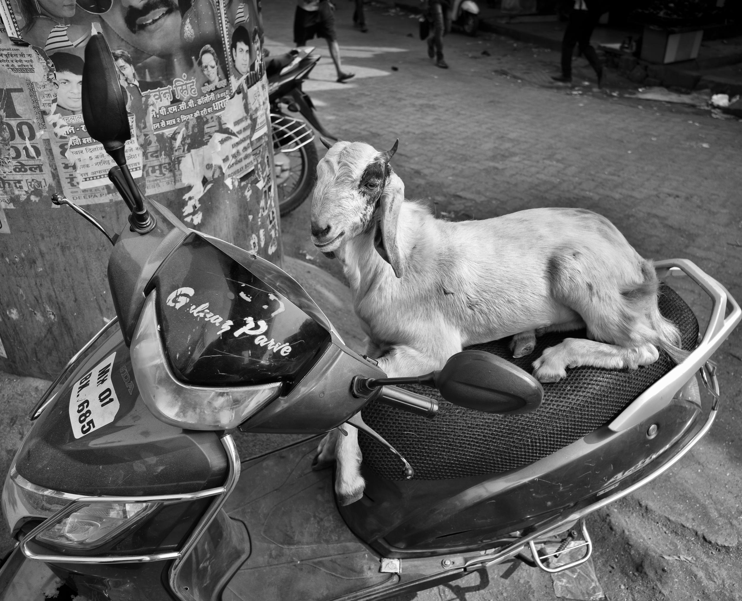 mumbai goat