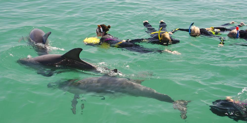 Swim with Wild Dolphins top side (1).jpg
