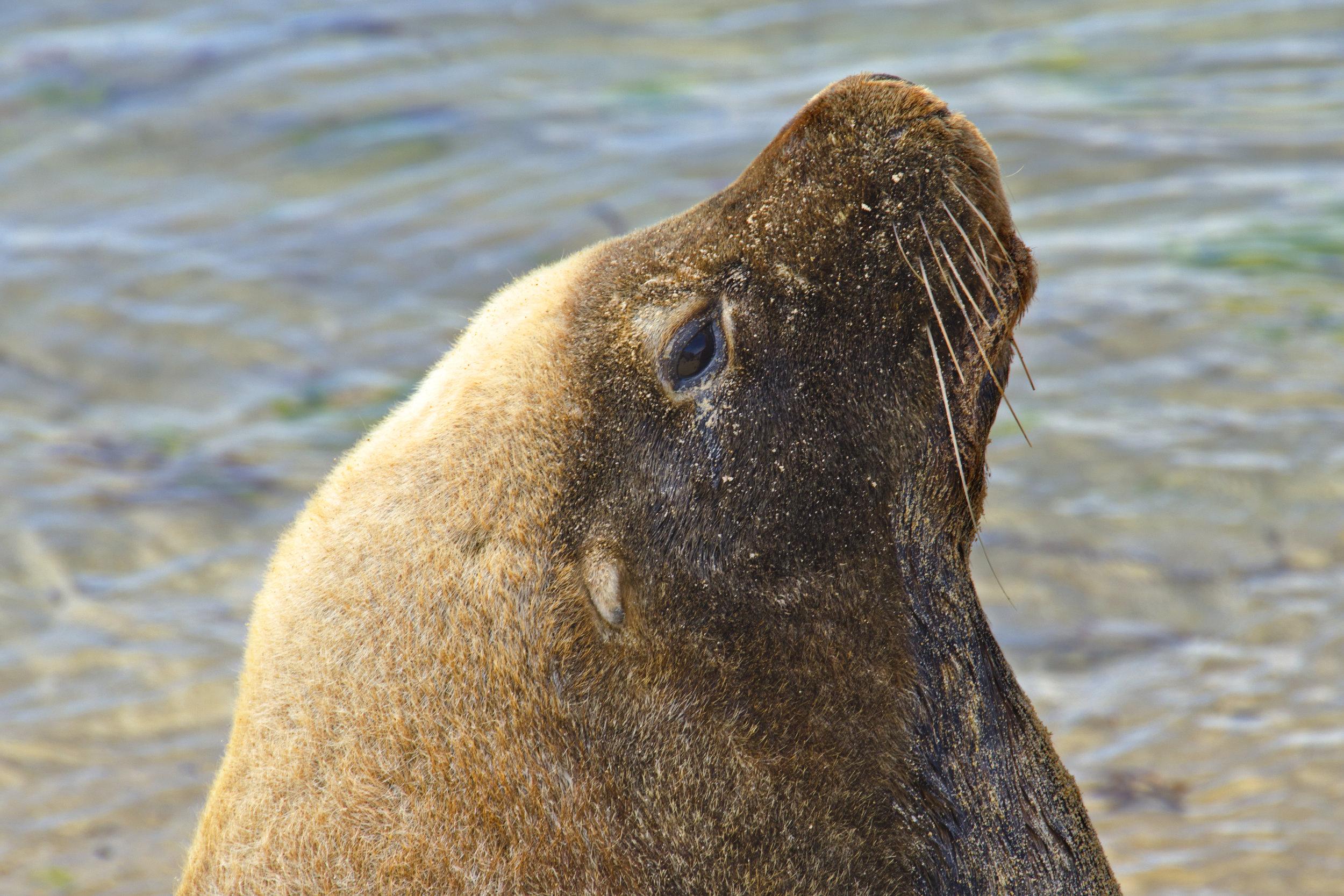 wildlife cruises perth