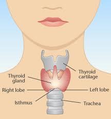 hyperthyroid symptoms