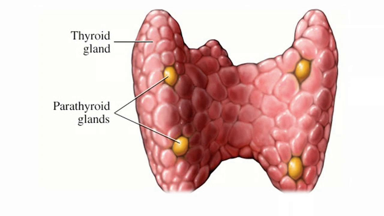 tsh-thyroid-stimulating-hormone