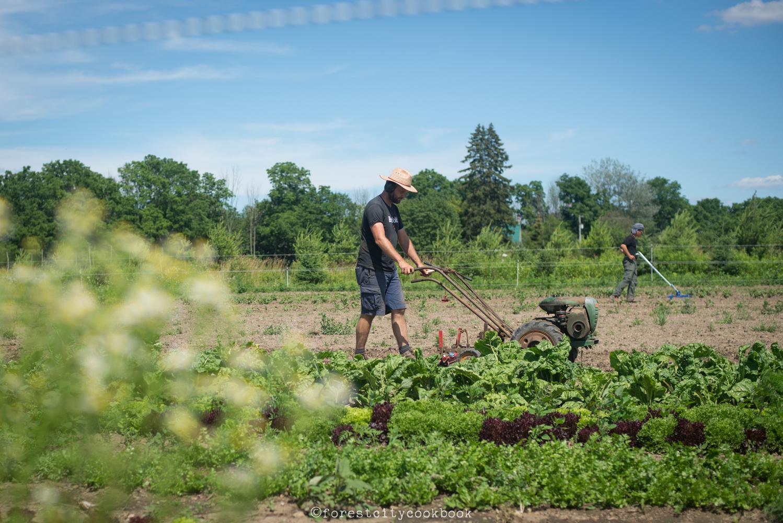 Forest City Cookbook - Common Ground Farm - London Ontario