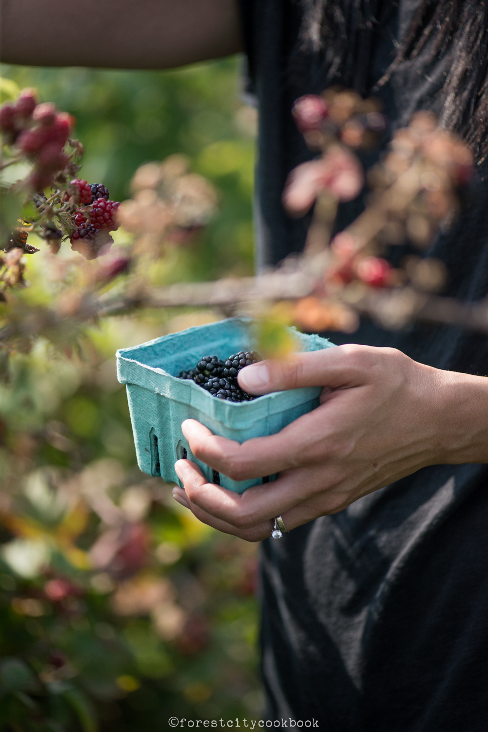 Forest City Cookbook - Blueberries and blackberries - Blueberry Hill - London ontario