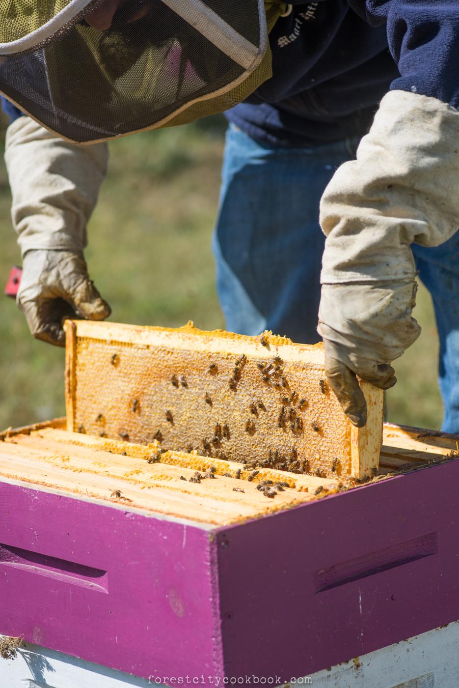 Forest City Cookbook - Wildflowers Honey