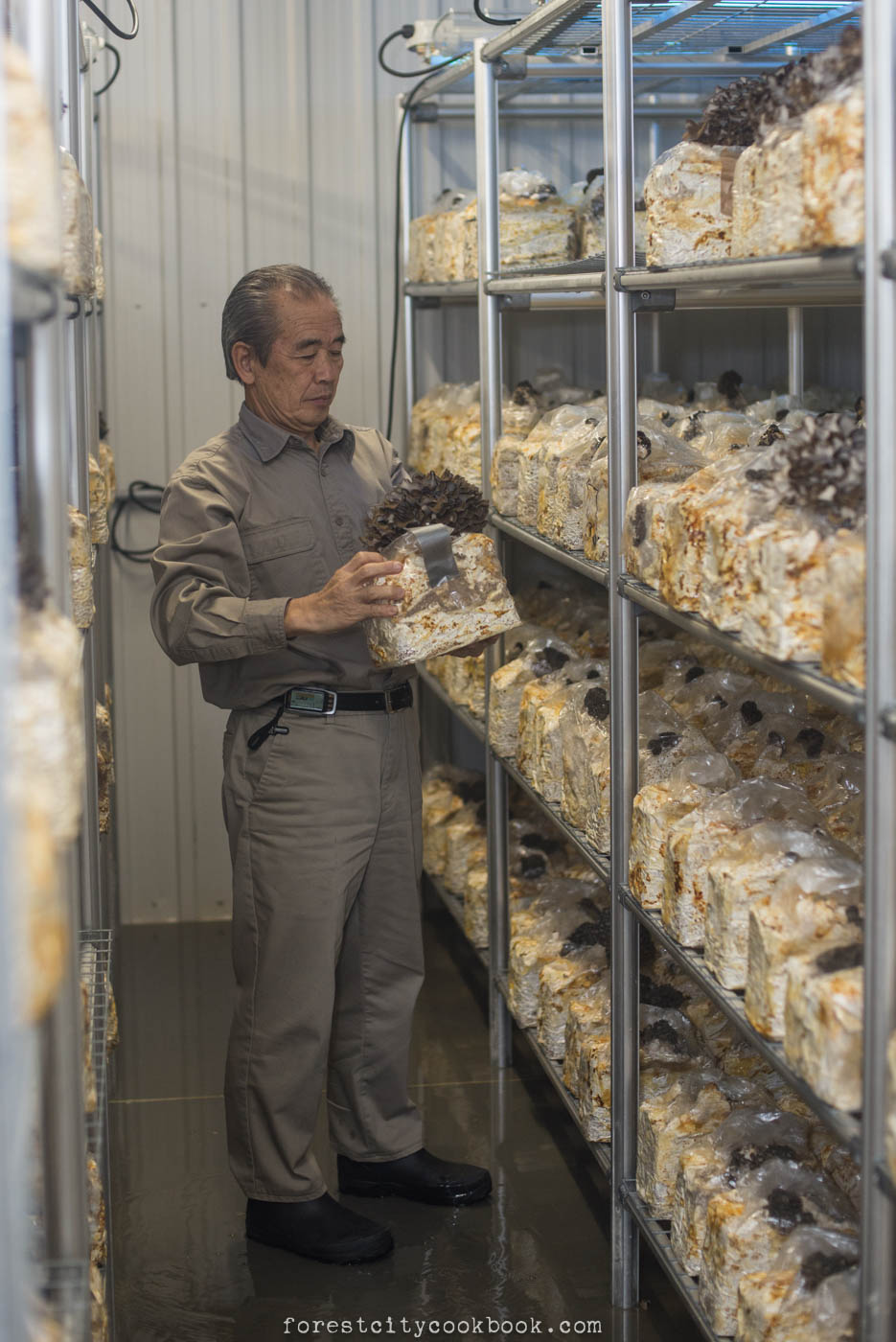 Forest City Cookbook - Shogun Maitake Mushroom