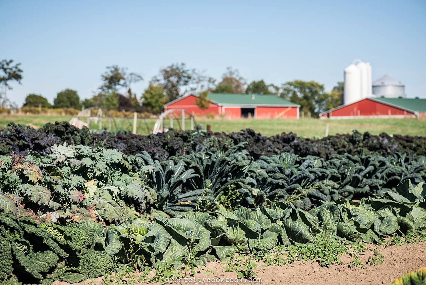 Forest City Cookbook - Farmer friends-part 3