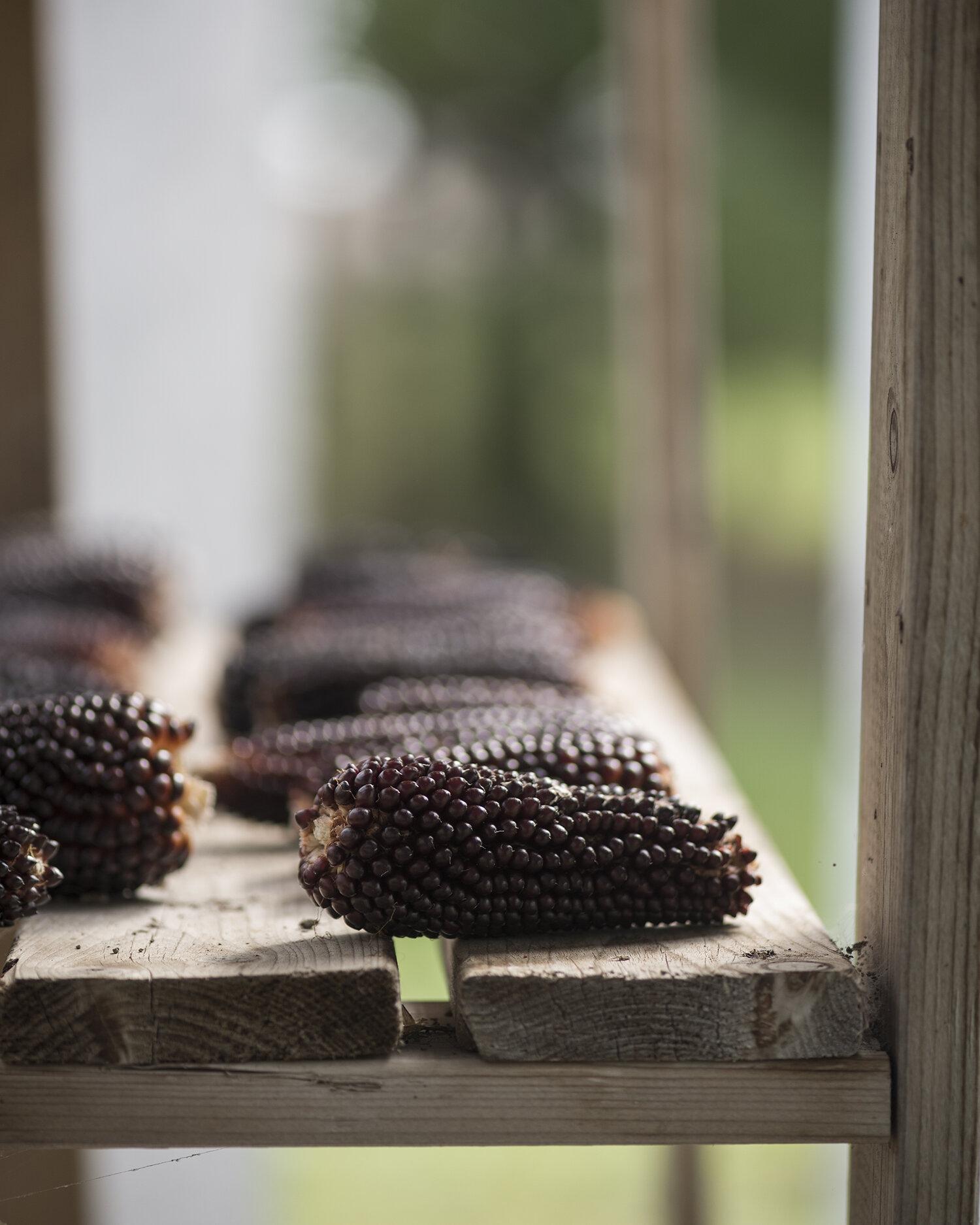 Forest City Cookbook - Kawthoolei Farms - Heritage Grain weekend - 6618.jpg