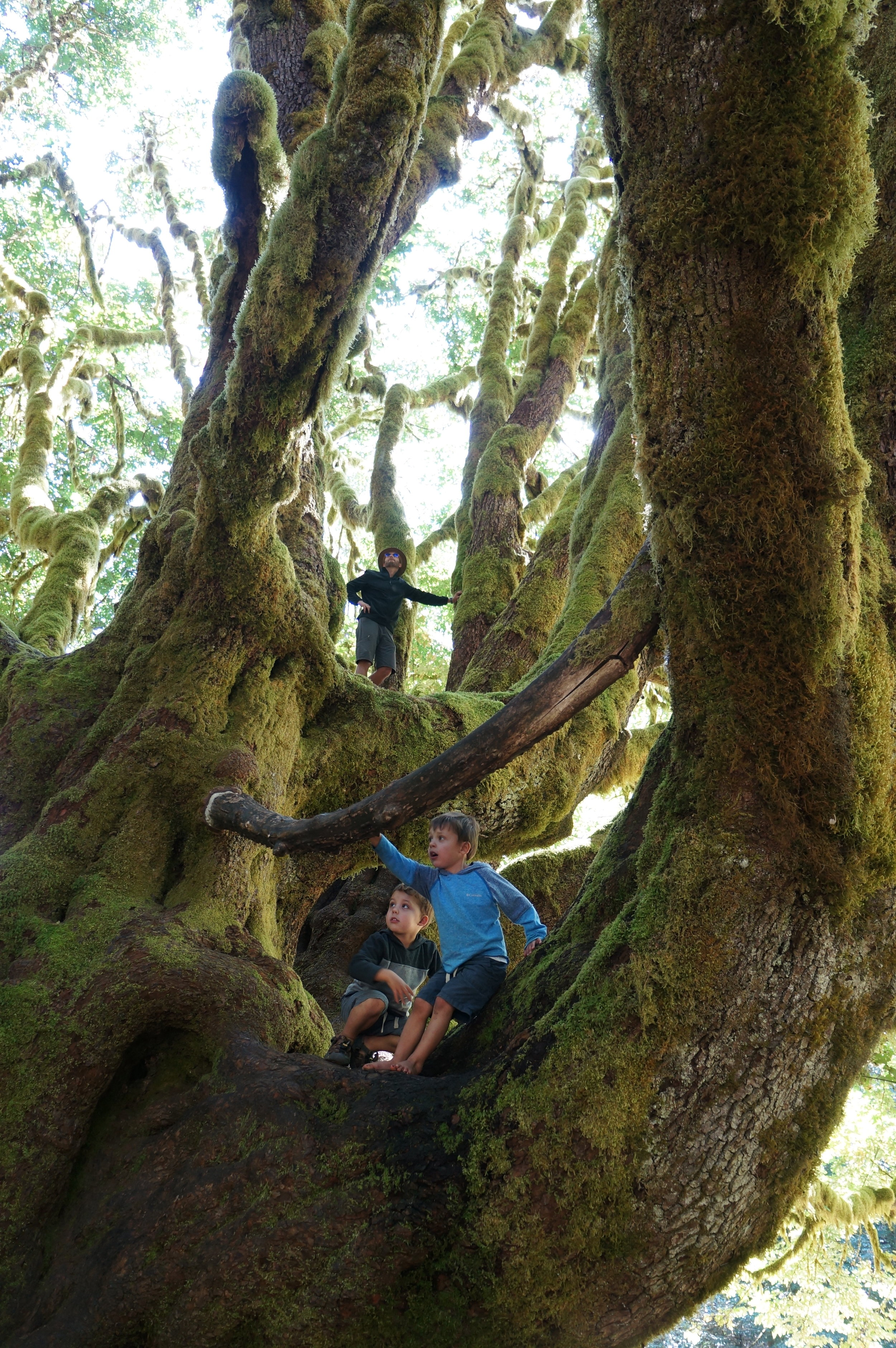 A Tree Fit For Climbing!