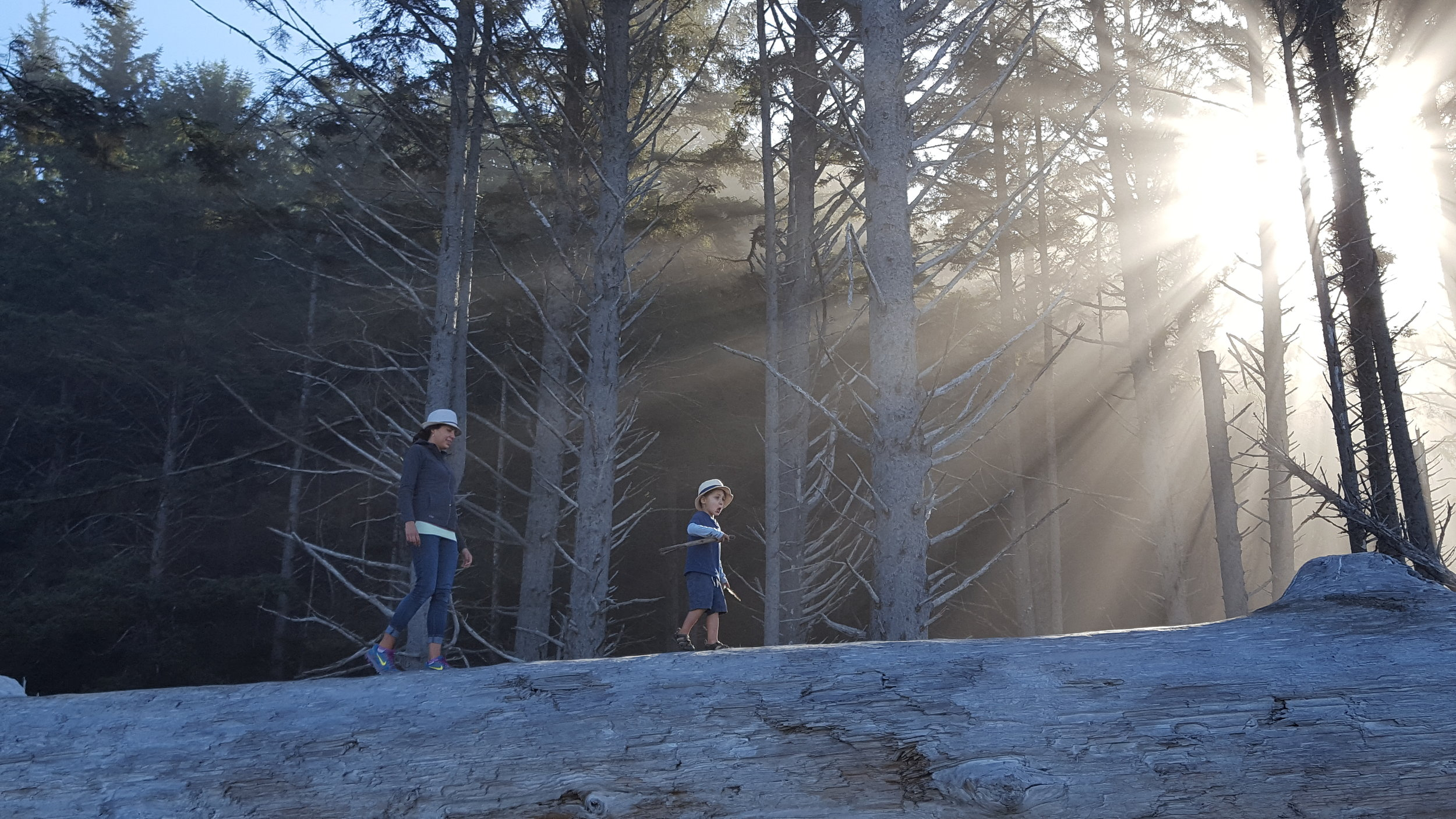 Walking Along the Huge Logs