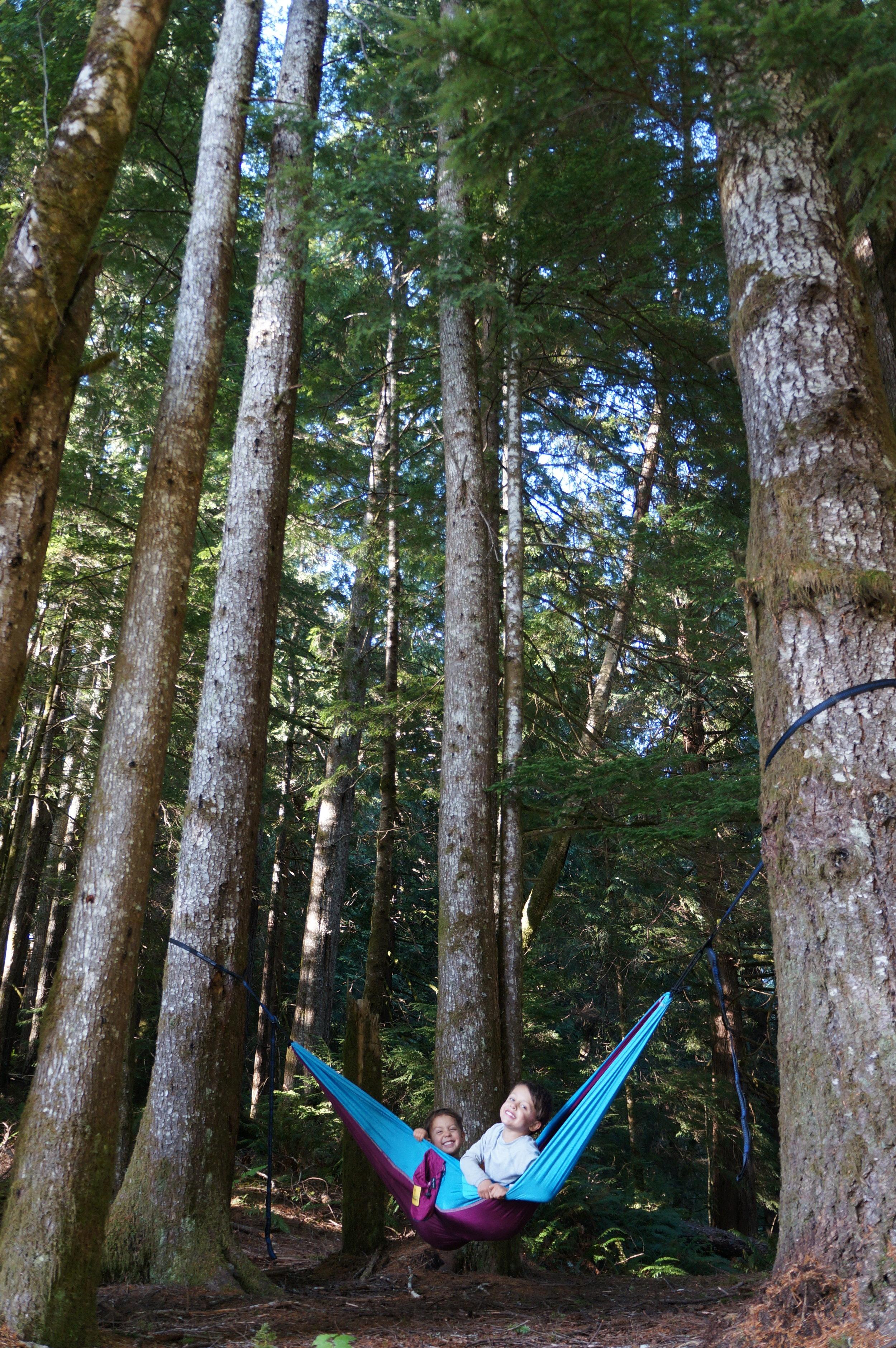 suislawnationalforest.jpg