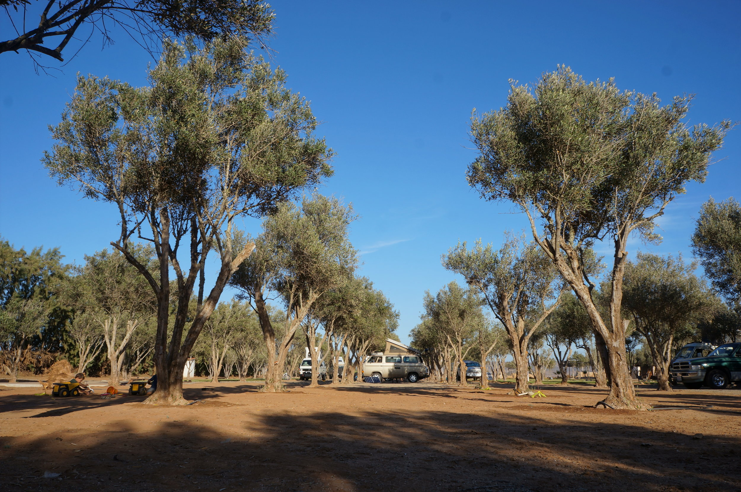 Camping among the olive trees, Los Olivos RV Park, Baja California