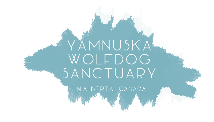 yamnuska-wildlife-dog-sanctuary.png