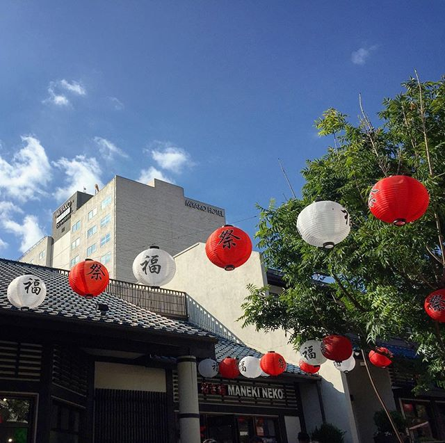 Yesterday we were in downtown LA looking at the sky with beautiful Ginkgo trees  #losangeles #littletokyo #beautifulday #shopping #japanese #ginkgobiloba