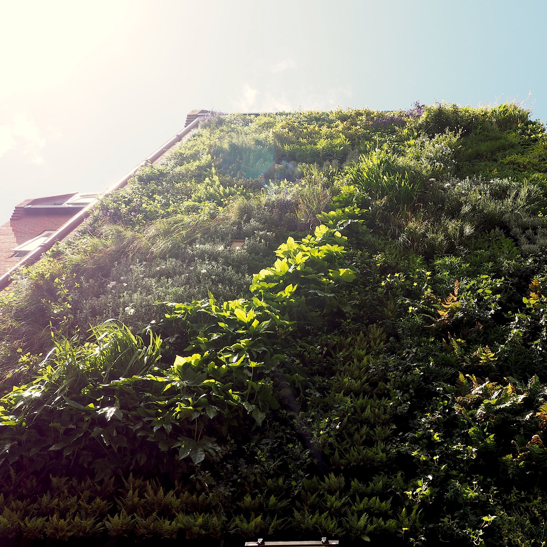 Orchard-Lisle Living Wall Reveal - June 2019