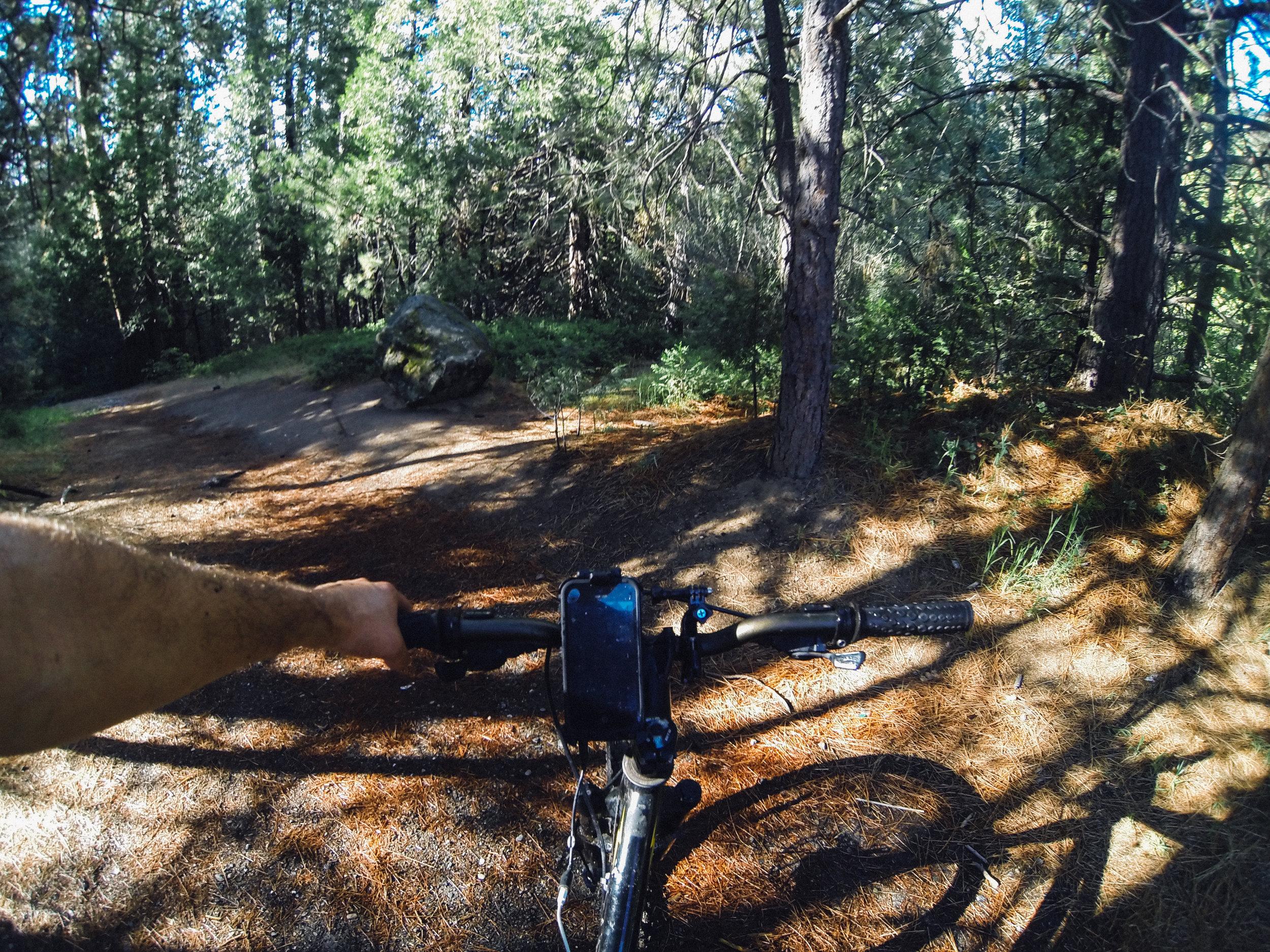 Mountain Biking at Lewis Creek