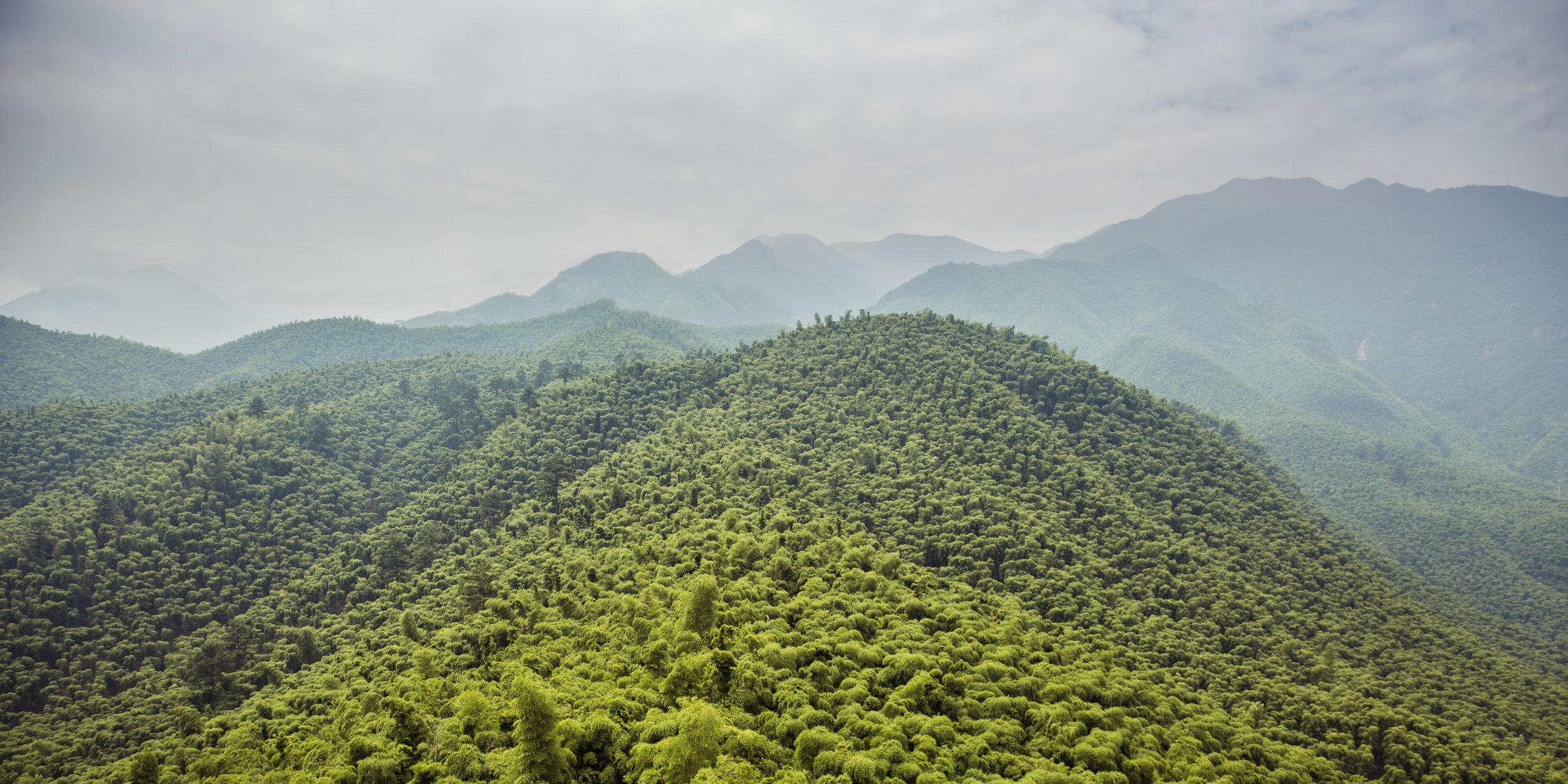 Set A - Ji bamboo forest-018-Edit.jpg