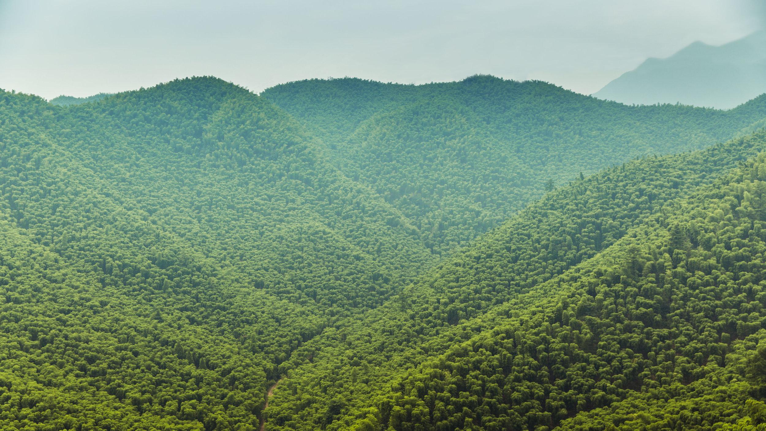 Set A - Ji bamboo forest-020-Edit.jpg