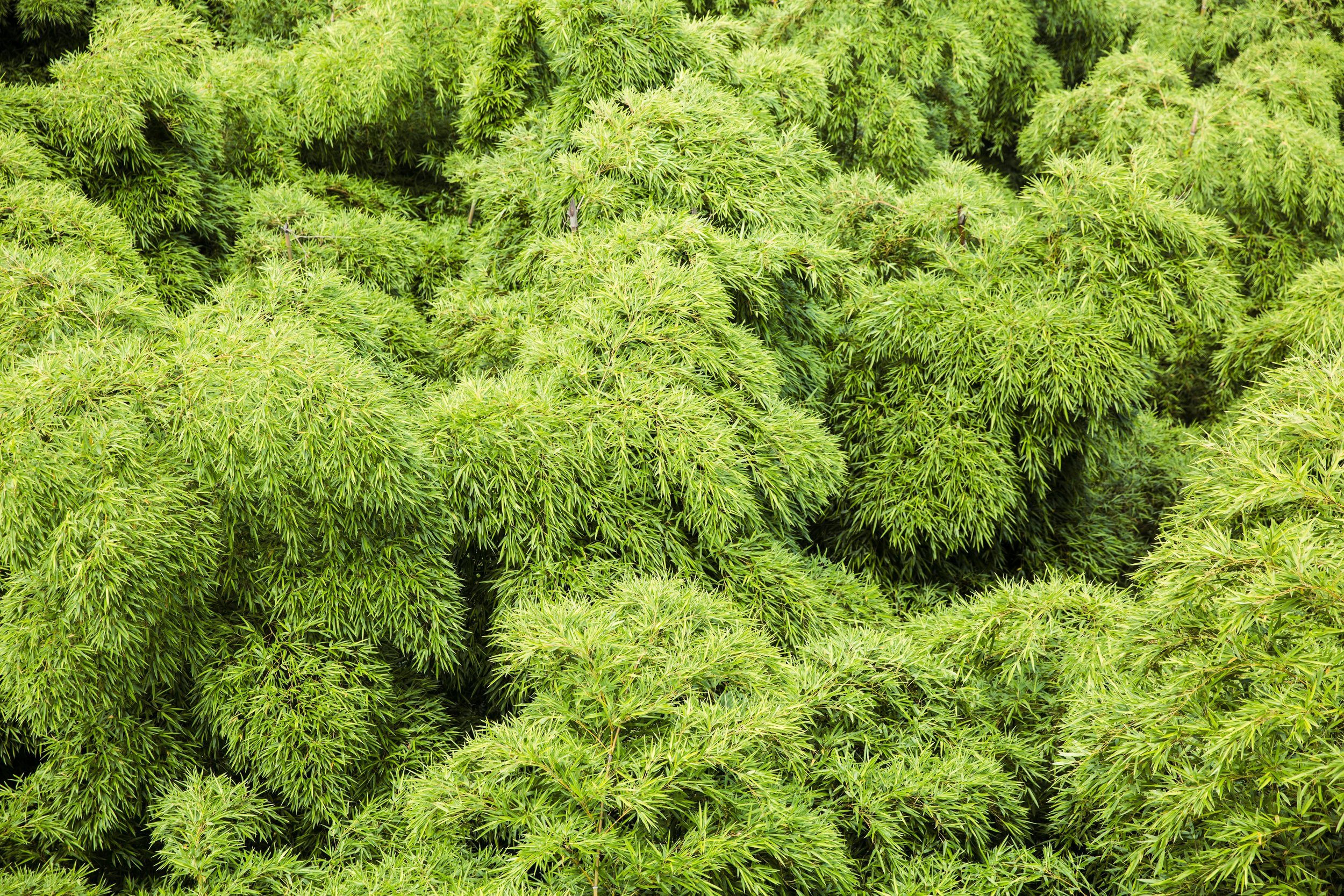 Set A - Ji bamboo forest-021.jpg