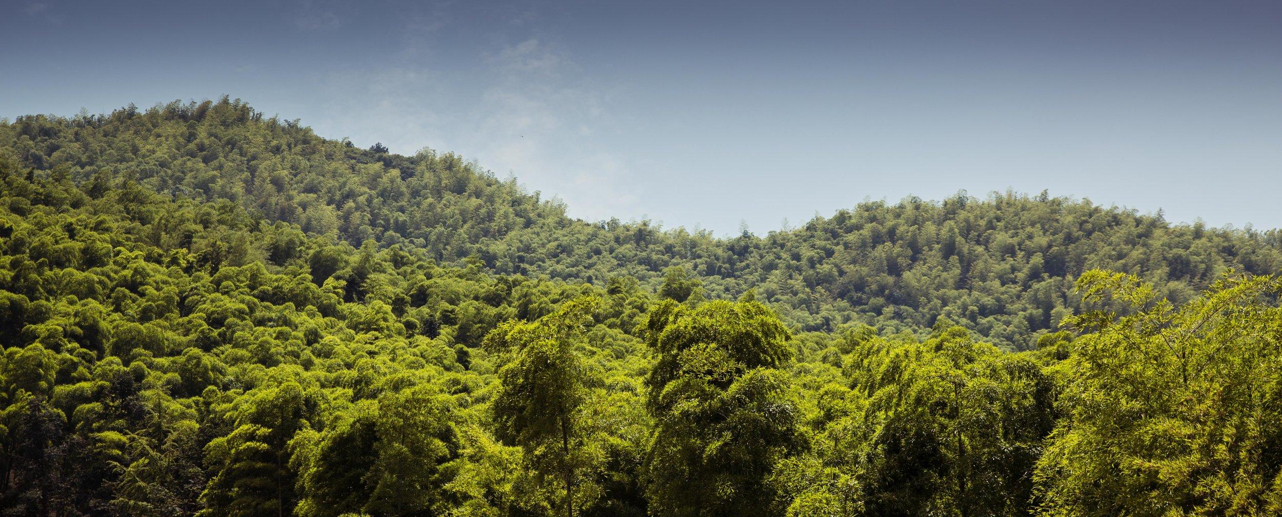 Set A - Ji bamboo forest-102.jpg