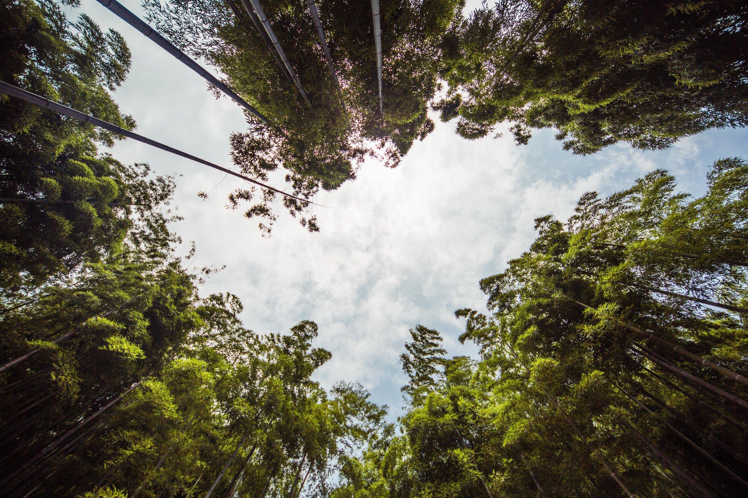 Set A - Ji bamboo forest-042.jpg