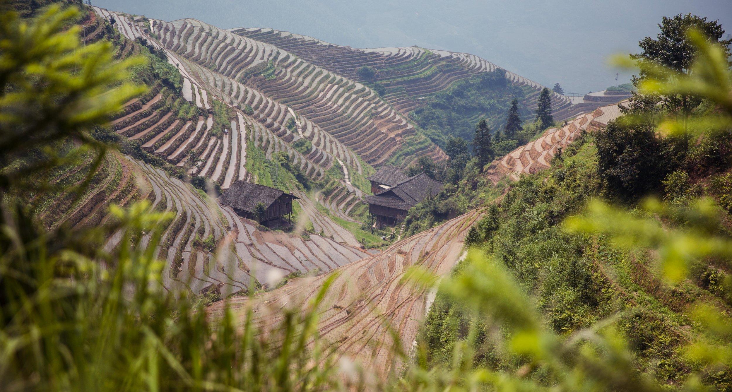 Set L - Long Ji Rice Fields-100.jpg