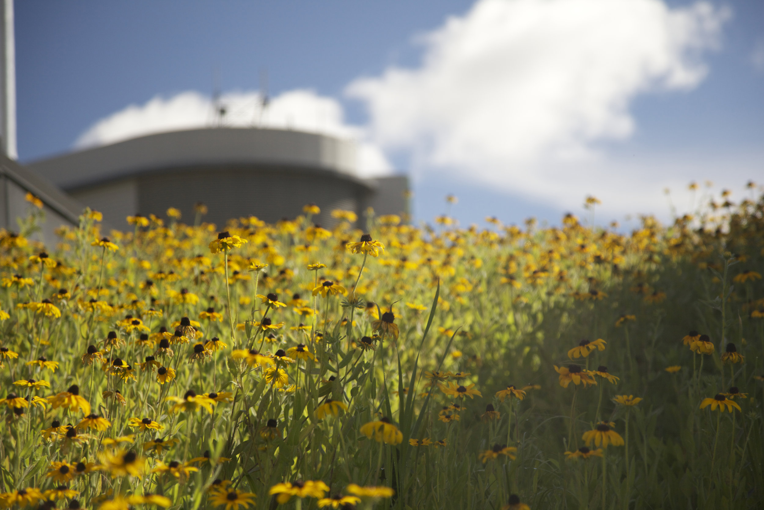 our green roof systems save more water. -