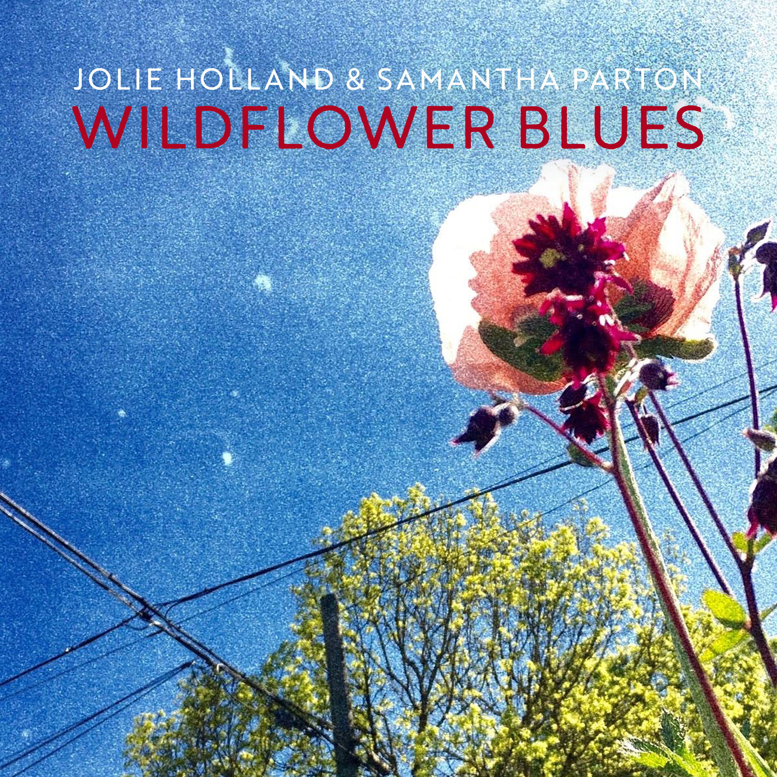 57935-Jolie-Sam_Wildflower_20Blues_20Cover_FINAL (2).jpeg