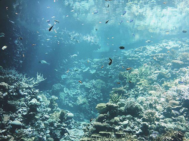 lijkt alsof ik ging duiken in de Bahama's maar stond voor een vissenkom