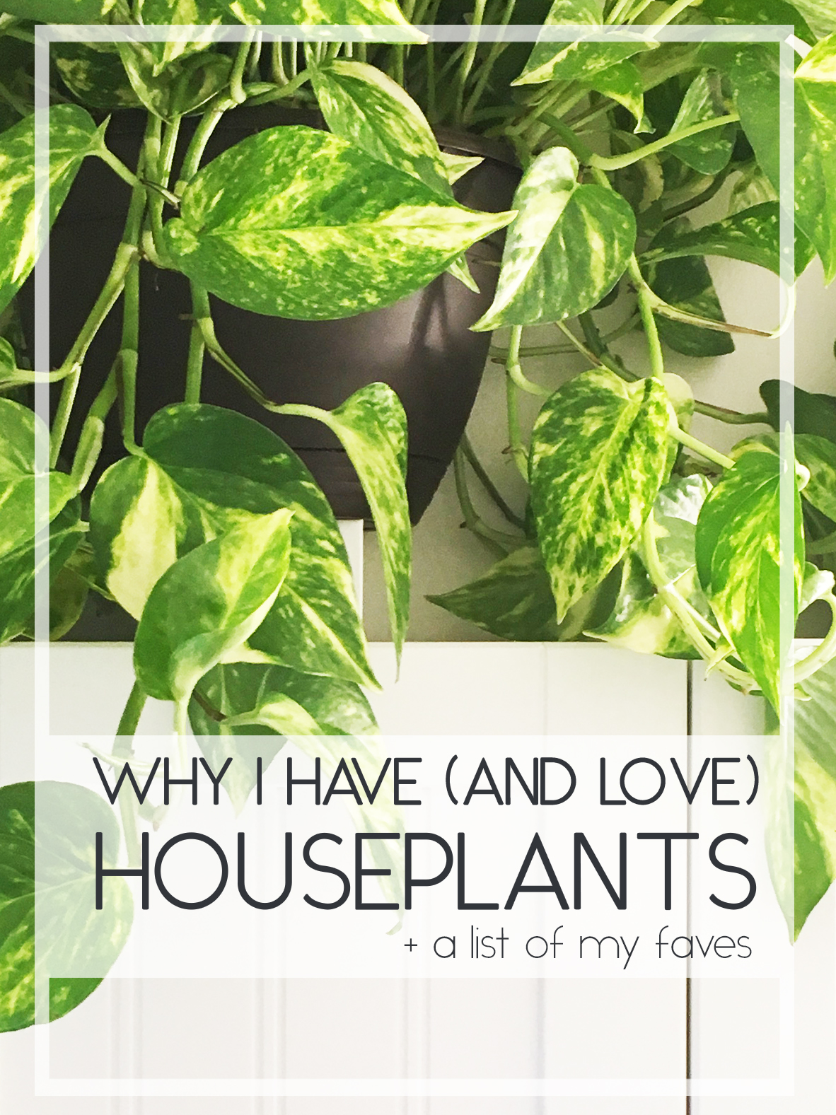 Houseplant-Header.jpg