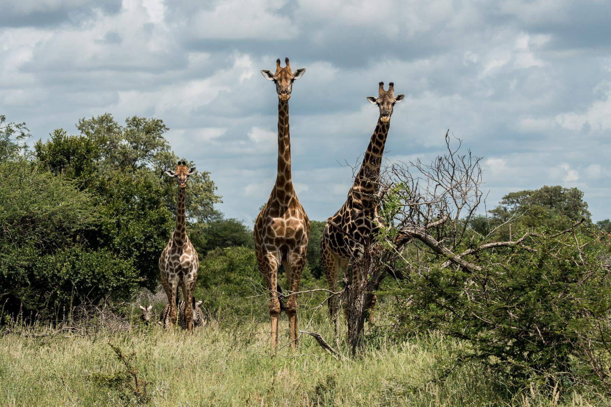 Africa_6-4.jpg