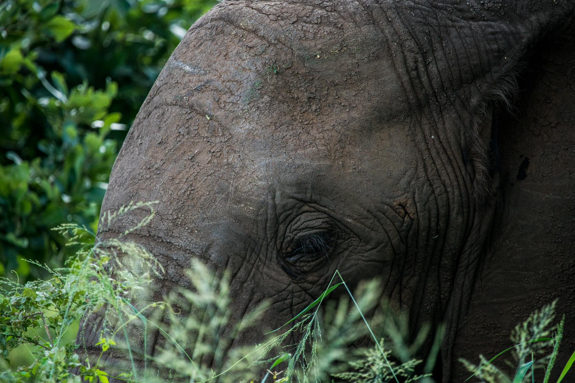 Africa_6.jpg