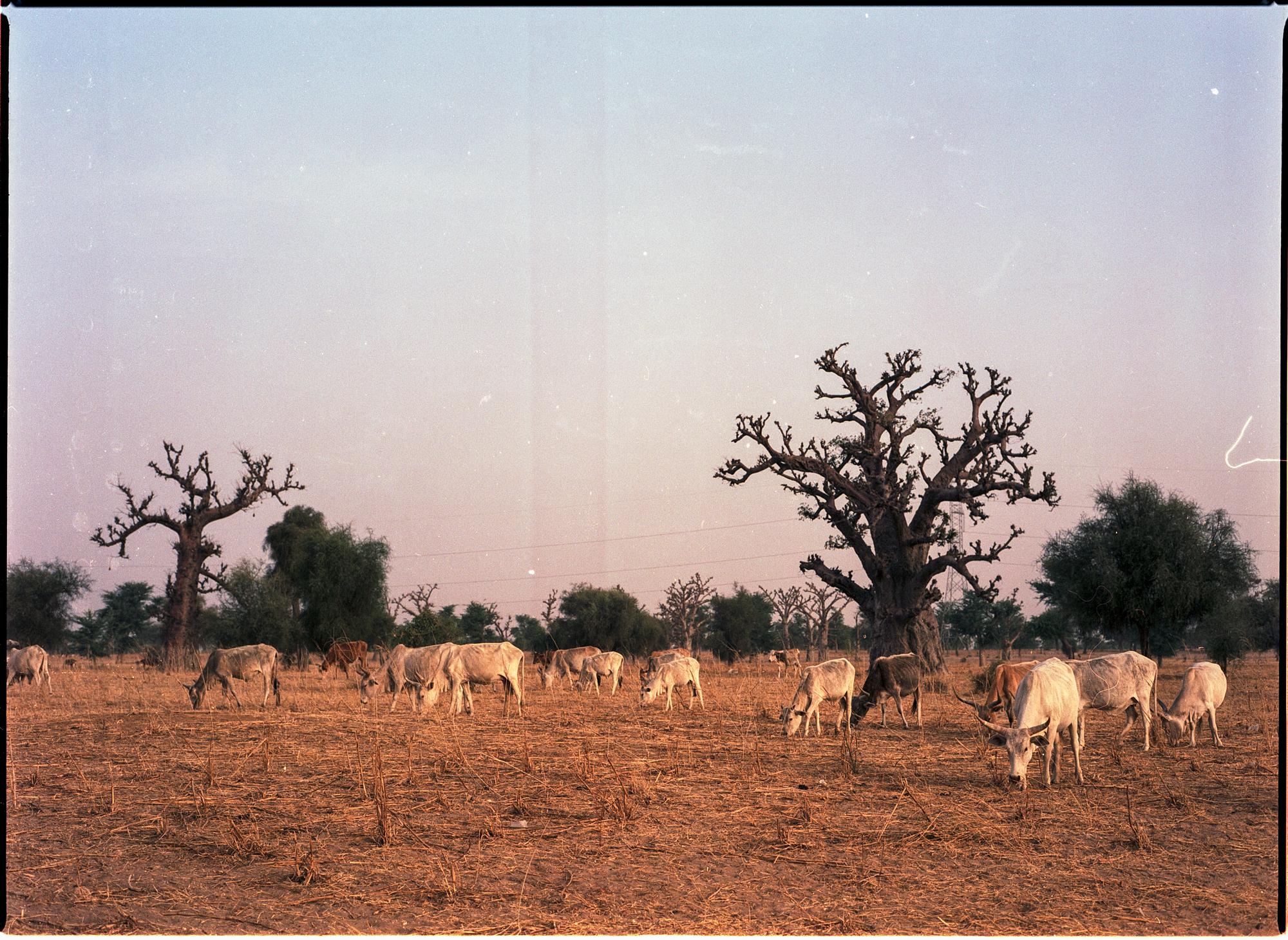 Africa_9.jpg