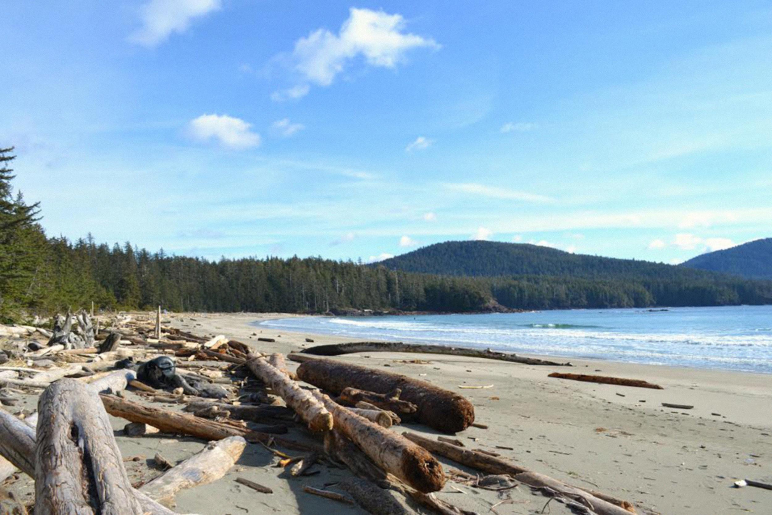 grant bay 9 logs sand ocean_2500.jpg