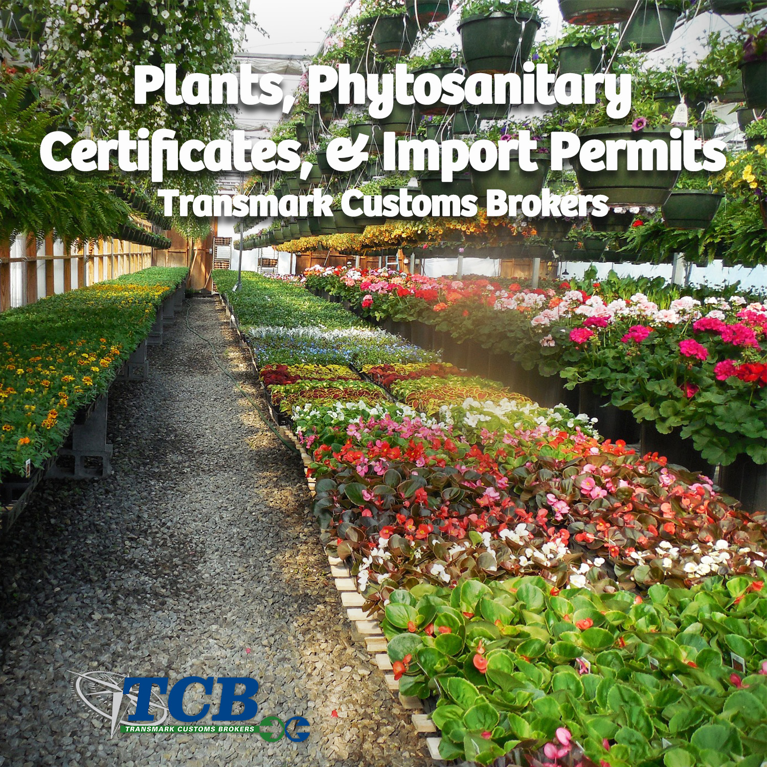 TCB Blog Plants, Phytosanitary Certificates, and Import Permits.jpg