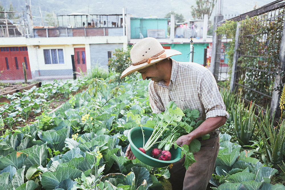 Guatemala_Farmer-4208.jpg
