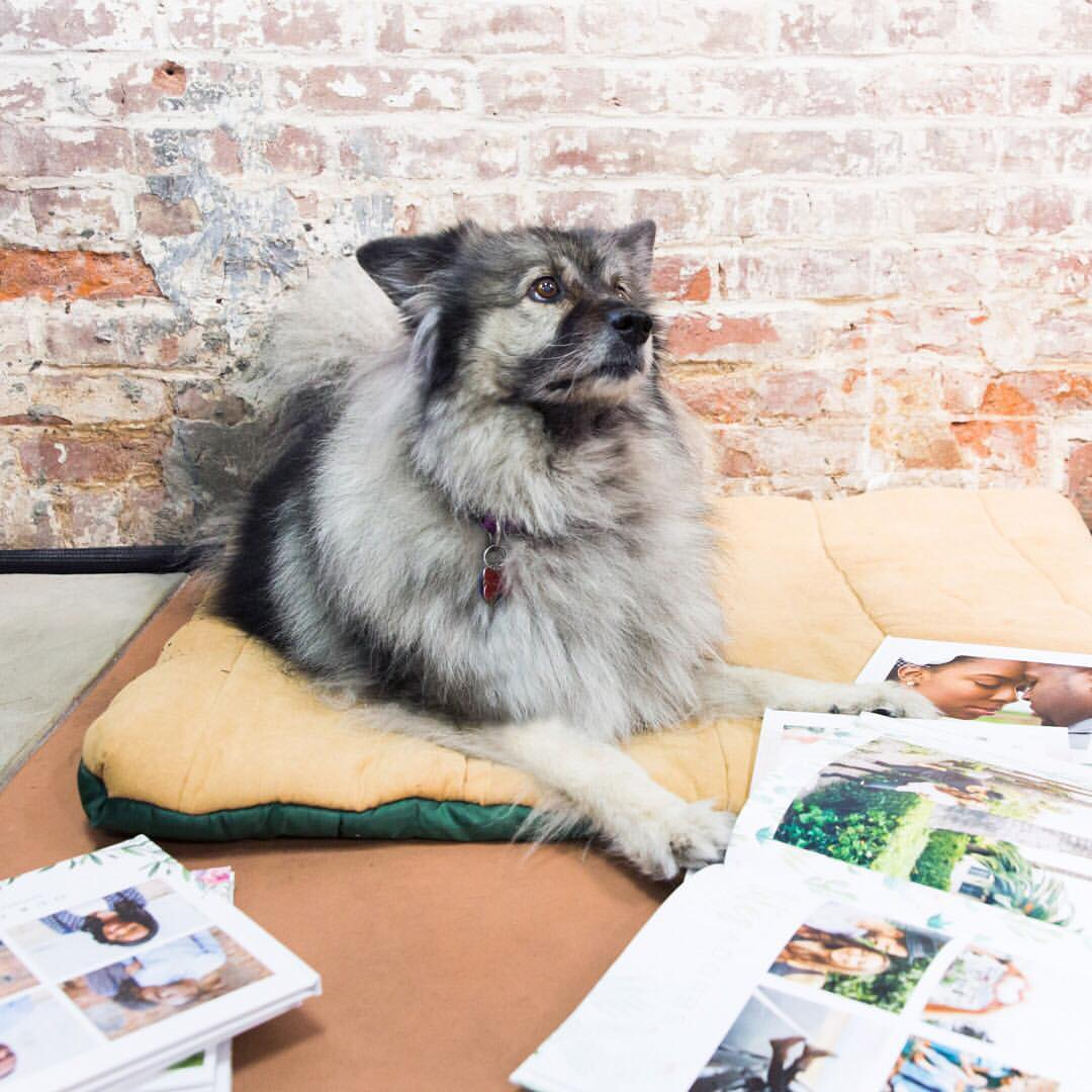 love-your-pet-day-mixbook-photo-book.jpg