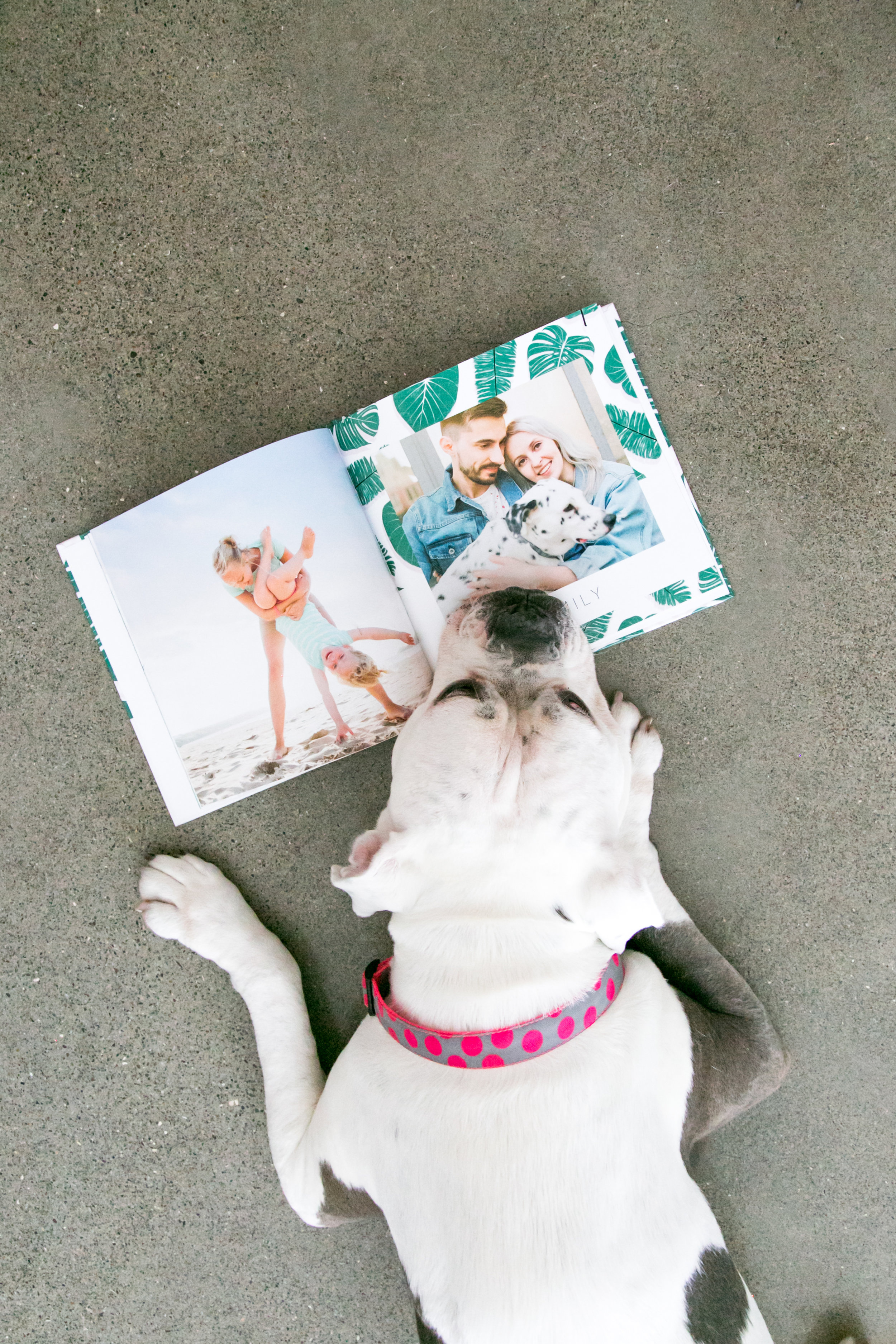 photo-book-for-pets