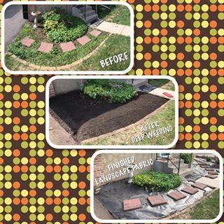 Tasked to do the dirty work and saving the client money as they said their children can lay the wood chip mulch over the fabric.