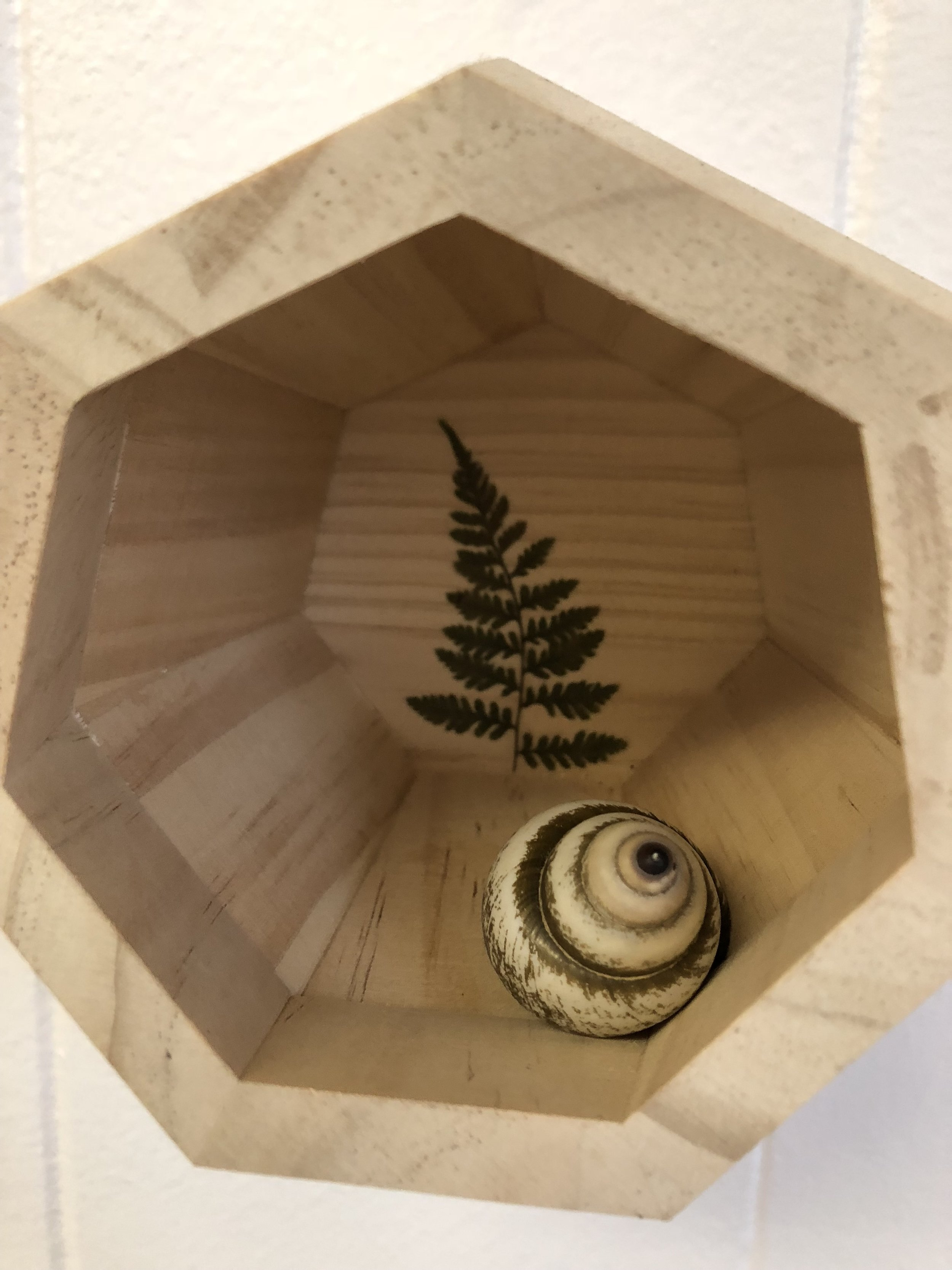 Mojdeh Rezaeipour,  First, we must unfurl , 2018, tree branch, baby fern & seashell on wood