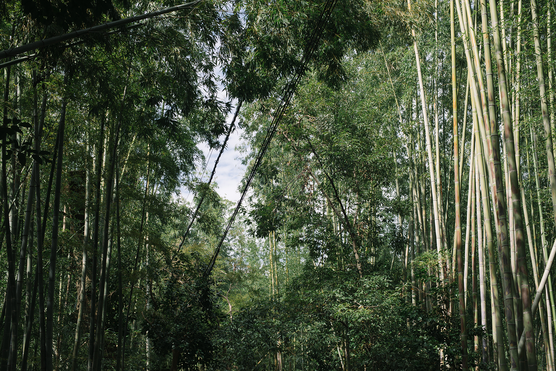The bamboo forest wasn't actually a forest.