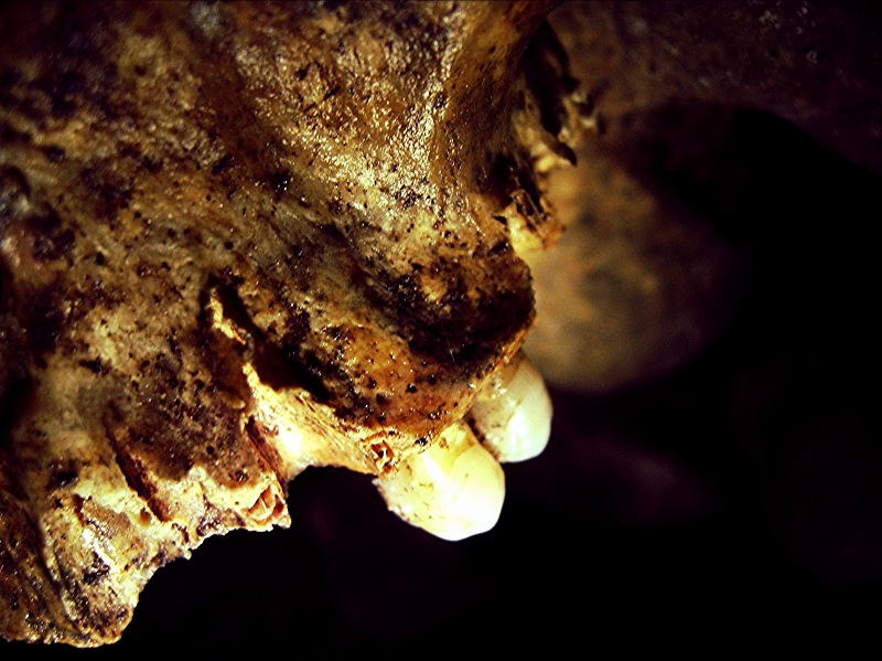 skull-detail_teeth_catacombs.jpg