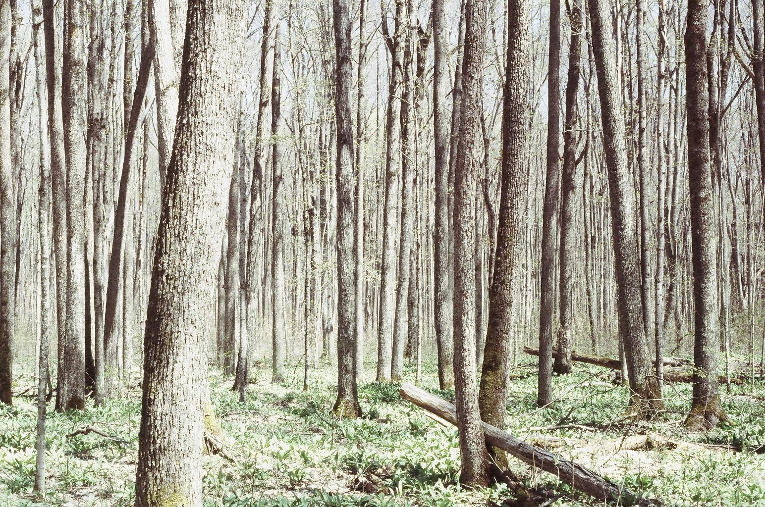 Home Hardwoods