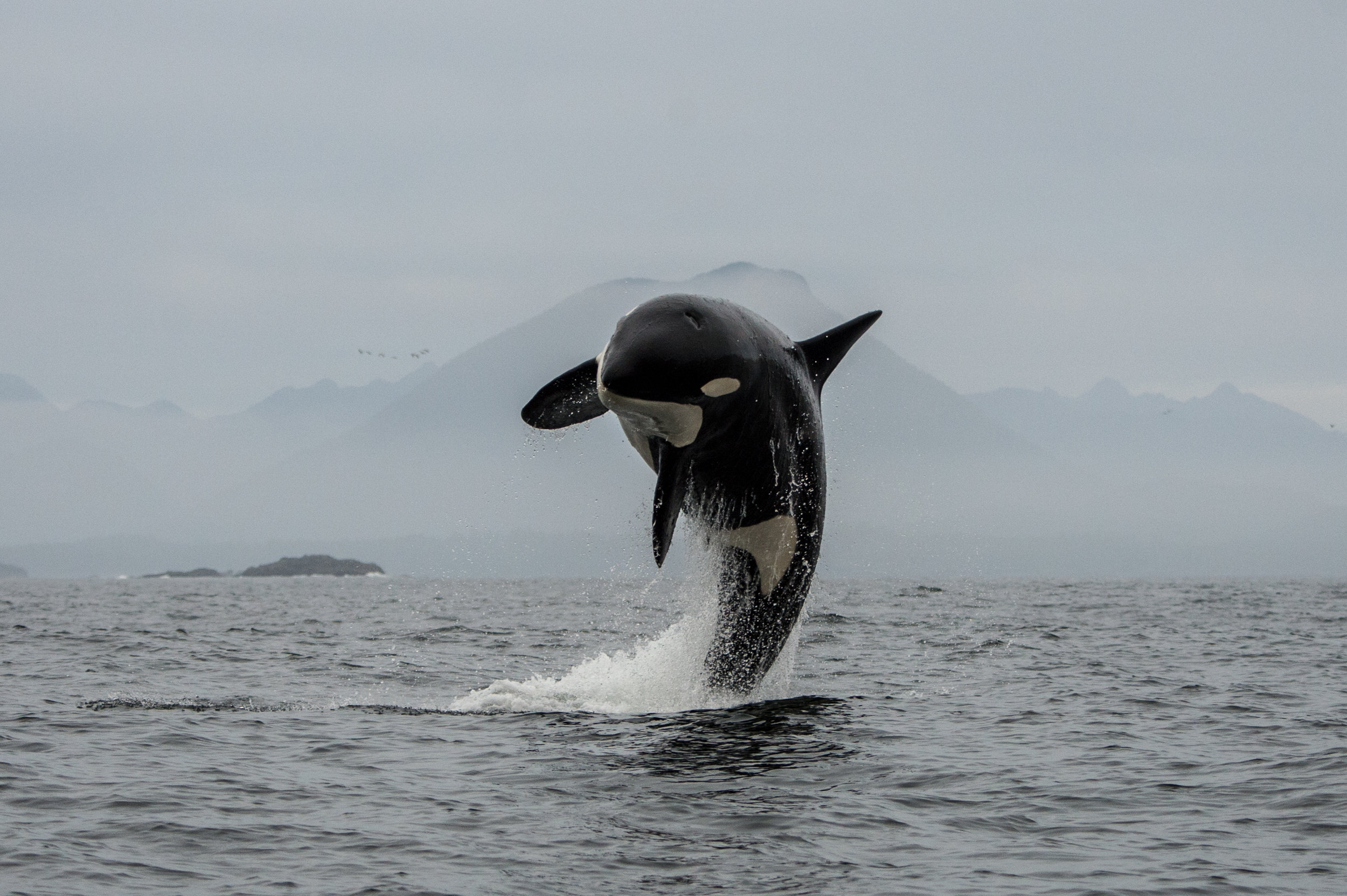 Tofino Whale Watching Tour