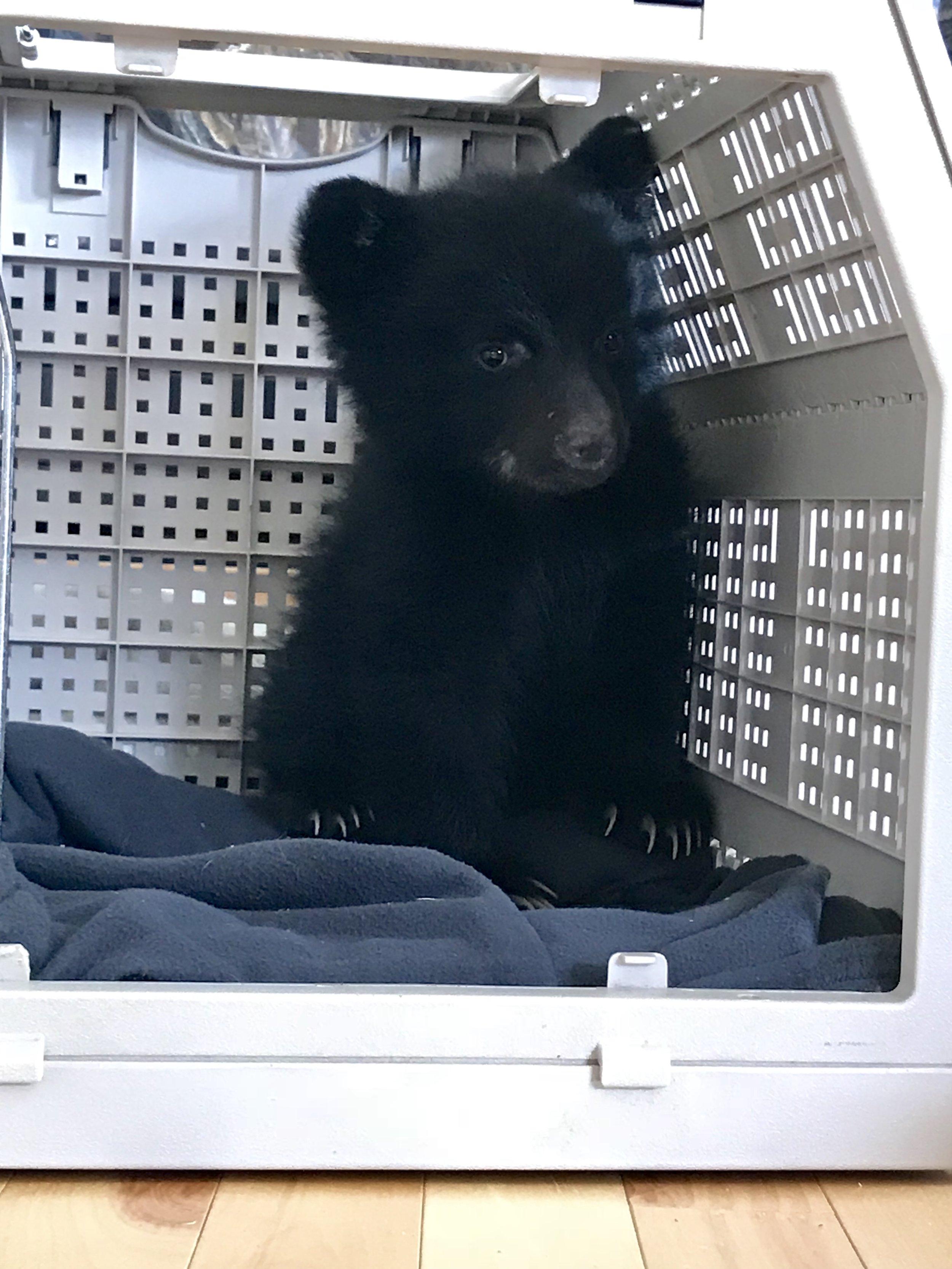 Tofino Bear Rescue